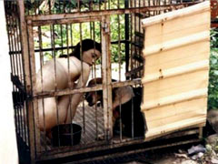 Caged dog slave